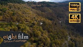 Aerial Stock Footage of Chestnut Trees